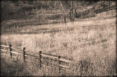 Field Of Dreams (catmccray) Tags: fence fencefriday country