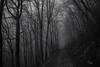 Ifleterberg (Toni_V) Tags: m2402664 rangefinder messsucher leica leicam mp typ240 28mm elmaritm12828asph hiking wanderung escursione randonnée jurahöhenweg solothurn wanderweg bw blackwhite monochrome schwarzweiss switzerland schweiz suisse svizzera svizra europe fog nebel mist iso2500 trees bäume wald forest winter ©toniv 2016 161229