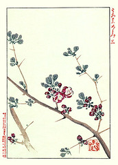 Chinese quince (Japanese Flower and Bird Art) Tags: flower chinese quince chaenomeles speciosa rosaceae renjo hitomi nihonga woodblock print japan japanese art readercollection