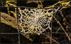 P1140832-1 -  Backlit Web Wonder (dangle earrings) Tags: wirefence wire spidersweb coveredwithhoarfrost frost wall dangleearings panasonicdmcgx8 backlit 52in2017challenge