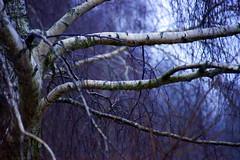 DSC01862 (Michael Rasmussen) Tags: michaelrasmussen minoltaamount sony sonyalpha sonya99 winter denmark danmark holbaekdenmark holbækdanmark holbaek holbæk