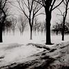 La brume c'est égarée dans le parc... (woltarise) Tags: momntréal rosemont beaubienest rue louisiane parc brume arbres