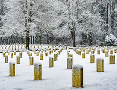 Silence (garshna) Tags: snow seattle fortlawtonseattle cemetery fortlawtonmilitarycemetery graves headstones trees snowing yellow
