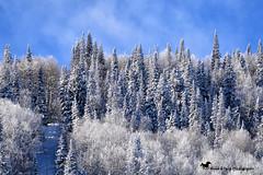 Winter Bliss (Aspenbreeze) Tags: grandmesa colorado snow mwinter sky hoarfrost forest trees ice landscape nature rural mountains bevzuerlein aspenbreeze moonandbackphotography