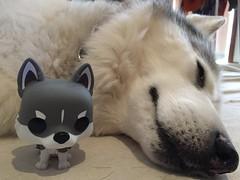 Grey Pod + Mini Me (redwolfoz) Tags: alaskanmalamute pod dog grey husky siberianhusky malamute funko funkopop
