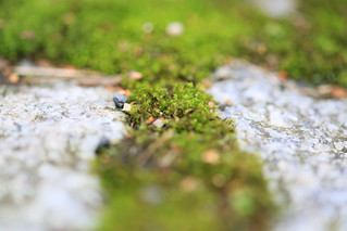 Green moss in between gray pavement