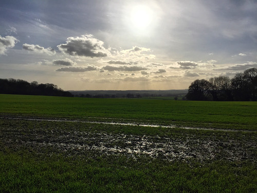 Hampshire Fields Winter Sun