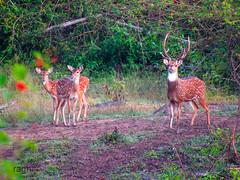 Dears team (raghphotography) Tags: wyanad raghphotography kerala forest canon ragh 520hs wayanadwildlifesanctuary dears beautiful