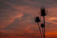 Llega la noche (javipaper) Tags: sunset red sky atardecer rojo cielo puestadesol