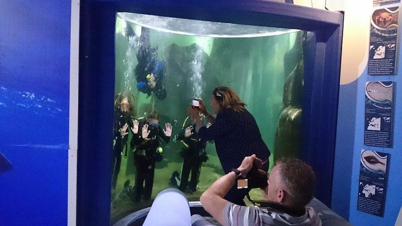Aquarium Dive -