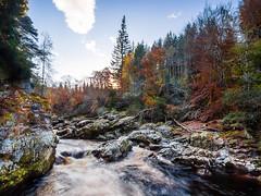 'Man Down' (Stoates-Findhorn) Tags: autumn landscape scotland unitedkingdom moray forres riverfindhorn 2013 randolhsleap