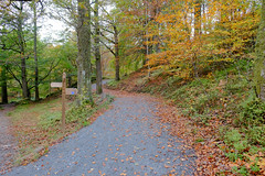 Pointing The Way..... (wivvy is getting there.) Tags: autumn leaves woodland landscape lakedistrict autumnleaves autumncolours cumbria pathway xt1 xf1855mmf284rlmois mileswithoutstiles