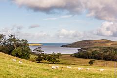 Schotland (Henk Verheyen) Tags: autumn skye landscape scotland herfst gb isle landschap schotland lyndale edinbane verenigdkoninkrijk fotoreis
