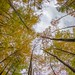Full Autumn mode