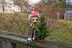 Tree Lights (CornflowerBlue07) Tags: dal groove monomono christmastreelights
