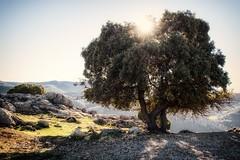 Olivo (dubdream) Tags: light shadow españa sun mountains tree nature rock andalucía olympus sierra árbol jaén olivo olivenbaum beautyinnature sierrasdecazorla seguraylasvillas dubdream