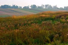 Poranna mgła 15 (Hejma (+/- 5400 faves and 1,7 milion views)) Tags: trees green nature yellow fog landscape outside poland polska august natura zielony mgła żółty drzewa krajobraz sierpień acclivity cultivations wzniesienie uprawy chłopskiepola płaskowyżproszowicki peasantfields plateauproszowicki