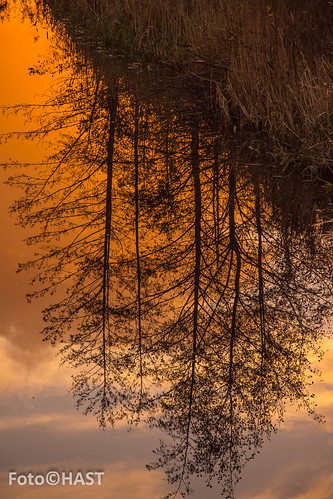 2015 The mirroring of the trees during the golden houre