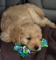 dakota-and-mavericks-little-girl-roxie-is-getting-acquainted-with-her-new-toys_18376747694_o