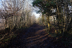 Afternoon walk in the Sunshine (PogiPete) Tags: woods sunshine gloucestershire cotswold way escarpment coaley peak