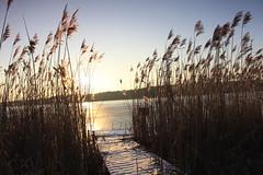 IMG_3194 (wozischra) Tags: berlin heiligensee spaziergang baumberge höchster baum altheiligensee