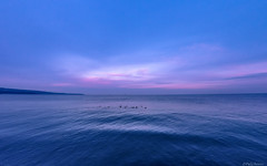 Pure (@Dpalichorov) Tags: outdoor shore landscape seaside ocean sea water sky nature birds blue sunset pink bluesky pure purewater varna bulgaria варна българия light clouds shadow animals nikond3200 nikon d3200 action camera firefly6s ngc autofocus nikonflickraward wide angle wideangle