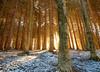 _DSC8314 (Giuseppe Cocchieri) Tags: foresta forest trees tree alberi albero winter inverno allaperto mountain montagna earth terra landscape paesaggio nature natura sole sun sunrise colore colour