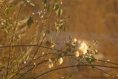Winter (Natali Antonovich) Tags: winter christmasholidays christmas snow frost bird tervuren belgium belgie belgique nature