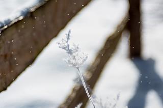 neige soufflée ❄️ Blowing snow