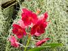 Duke Farms-7013041-2 (myobb (David Lopes)) Tags: dukefarms hillsborough nj newjersey nature olympus em1 omd