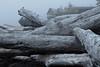 The Wickaninnish Visitor Center in Pacific Rim National Park, Vancouver Island, BC (Jim 03) Tags: long beach largest longest pacific rim national park vancouver island bc wickanninish bay tofino ucluelet driftwood visitor centre jim03 jimhoffman jhoffman jim wwwjimahoffmancom wwwflickrcomphotosjhoffman2013