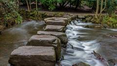 2017-01-17 Rivelin-7397.jpg (Elf Call) Tags: nikon endcliffepark river yorkshire water stream 18105 sheffield steppingstones waterfall d7200 blurred