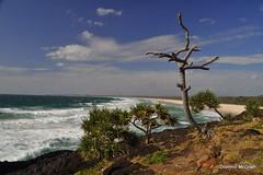 Fingal Head. (mcgrath.dominic) Tags: pandanustree kingscliff basalt tweedheads fingalhead newsouthwales australia