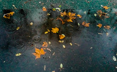 2017-01-13 – Un vendredi 13 à 5h (Hubert Félix Thiéfaine) (Robert - Photo du jour) Tags: janvier 2017 regarddunjour unvendredi13à5h hubertfélixthiéfaine pluie feuille triste noir trottoir gris goutte