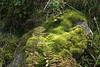 07-IMG_9130 (hemingwayfoto) Tags: österreich alpen berge farn flickr hohetauern landschaft moos rauris reiseziel tourismus wandern