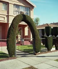 Sidewalk arch (ADMurr) Tags: la eastside sidewalk walkway arch mamiya 7 kodak ektar 80mm bbb308