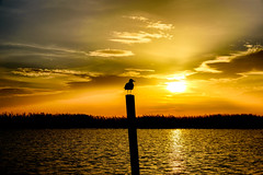 Esperando el atardecer (Ruben H. Pinilla) Tags: nikon d750 nikond750 tamronsp2470mmf28divcusd rubenhpinilla bird albufera valencia sunset cloud light atardecer sun landscape silhouette