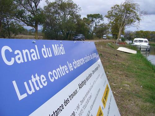 Lutte contre le chancre coloré du platane à Canal du Midi