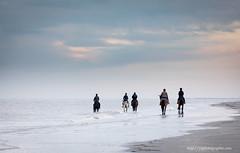 cavalerie (ylemort) Tags: cheval paarden beautiful belgique belgium beach sea zee canon canon5dmkiv koksijde kust photography photographer
