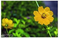 Best wishes for World Photography Day! (shovonrahmaney) Tags: flowers flower canon campus university ju bangladesh bangladeshi shovon jahangirnagar flickraward flickrunitedaward flickraward5 flickrawardgallery rahmaney clicktoframe