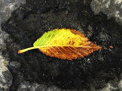 1 on Moist Tar (Mertonian) Tags: brown black green texture wet rain puddle design leaf pavement creative disconnected dust iphone ifone dust2dust mertonian robertcowlishaw