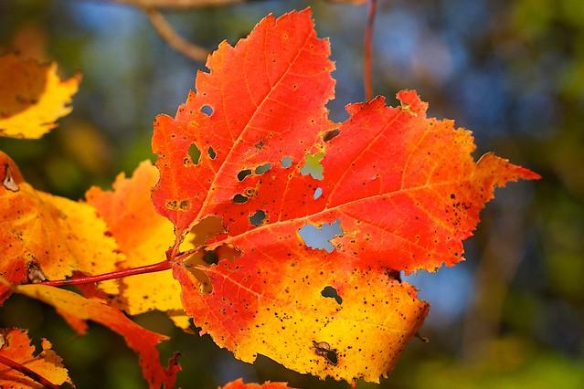 Wholely Autumn