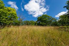 Dry Prairie (wackybadger) Tags: sky wisconsin clouds nikon bluesky prairie walworthcounty dryprairie wisconsinstatenaturalarea nikond7000 remnantprairie sigma1020mmf4exdchsm sna230 messinger91315 messingerunitbirdsfootviolethill