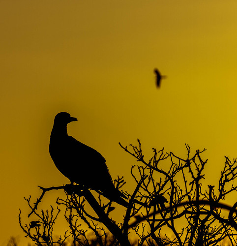 Galapagos Boobie Sunset