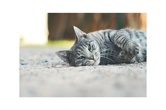 P1240287 (felixhelgesson) Tags: pets birds cat vintage sweden 14 olympus panasonic mm om 50 malm legacy 25mm gx7 cmount lumixgx7 cmountcanon25mm14gx7