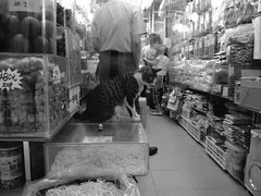 Cat on dried goods store