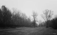 Alone in the dark ;) (Ricardo Alguacil) Tags: light bw white mist black tree byn blanco luz fog canon arbol eos italia alone camino path negro solo 7d bologna ricardo nebbia albero bianco bolonia nero niebla luce percorso 2470 alguacil ricardoalguacil