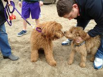 bui-and-his-half-brother-willie-meeting-at-the-park_6999346424_o