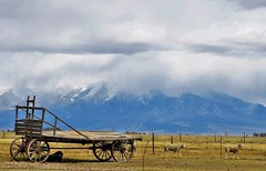 Ranch Country (Patricia Henschen) Tags: alamosa alamosacolorado colorado ranch country sheep rural west sanluisvalley wagon vintage mountains mountain sangredecristo clouds