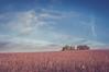 Deux arbres et des vignes (dono heneman) Tags: deux two arbre tree vignes vines paysage landscape campagne campaign matin morning ciel sky nuage cloud bleu blue vert green orange rouge red couleurs colors rural ruralité végétal vegetal végétation lepallet loireatlantique paysdelaloire france pentax pentaxart pentaxk3
